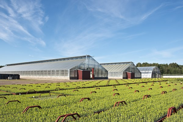 <p>Iggesund and the Holmen Group produce more than 30 million seedlings annually to ensure regrowth in their forests.©Iggesund</p>