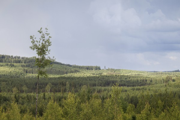 <p><strong>Caption:</strong> Stora Enso drives sustainable forest management as it safeguards forest health and productivity, helps combat global warming, and protects biodiversity – whilst securing the long-term availability of our renewable resources.Image: Stora Enso</p>
